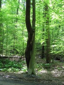 Entwining trees